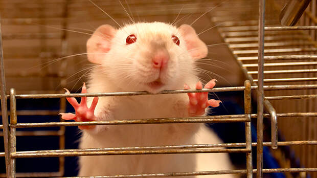 Верните деньги! Из людей вакцинаторы сделали лабораторных крыс. Делягин требует справедливости