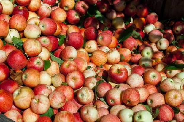 Диетолог Ковальков заявил, что залежавшиеся яблоки и отруби помогут избавиться от «плохого» холестерина