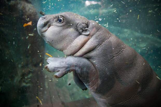 «Вторая мама»: как проходят будни смотрителей зоопарка
