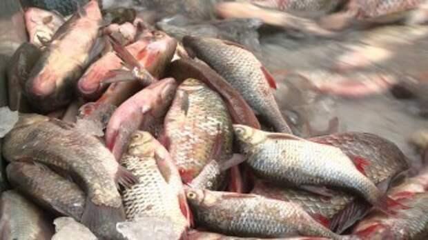 Горе-рыбаки уничтожили мальков рыб на 5 млн рублей