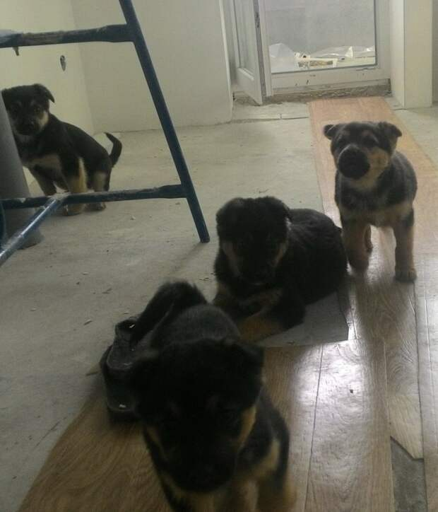 Из машины на дорогу выпали 4 пушистых малютки красивый щенок, пес, собака, черный щенок, щенок
