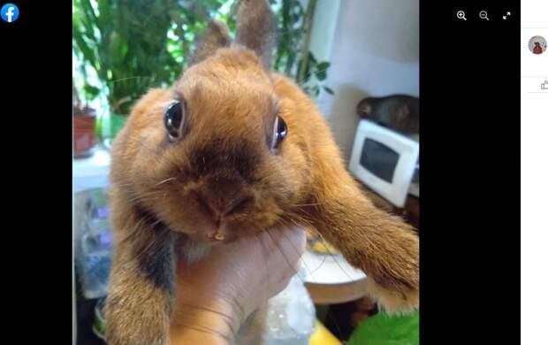 Кофейно-шоколадный кролик найден в сквере на Верхних Полях