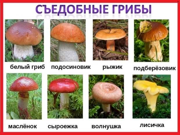 50 интересных фактов о грибах