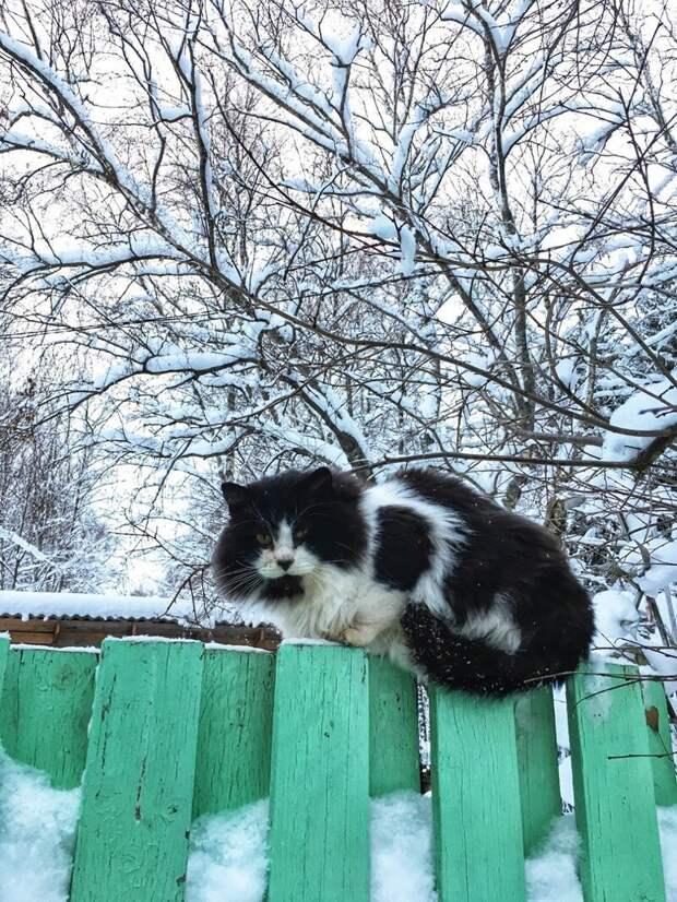 Король двора Хвостатые, братья наши меньшие, город, кот, кошка, улица, уличные кошки, эстетика
