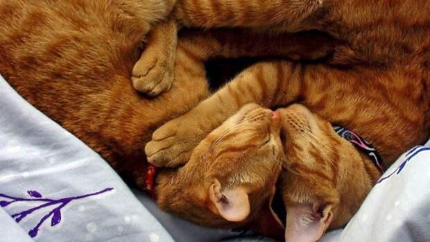 История про злую кошку...