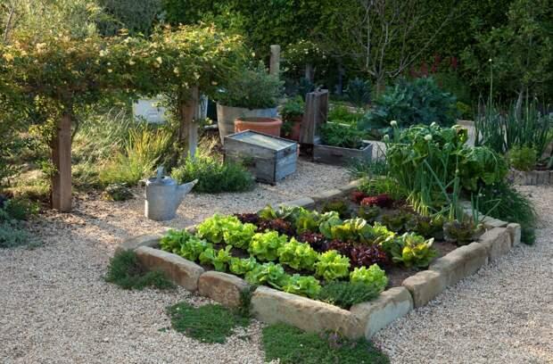 Огород в миниатюре: рациональный подход к созданию грядок