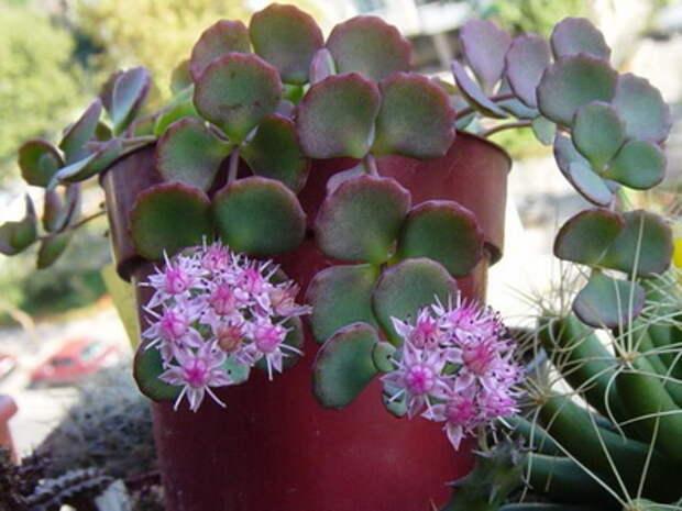 Почвопокровные цветущие многолетники - красивые и ухоженные клумбы без хлопот!