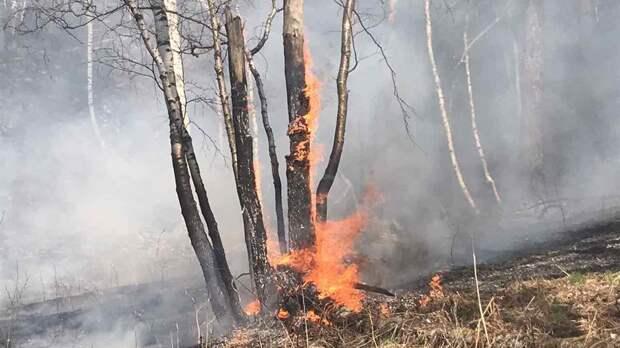Площадь лесных пожаров в России за сутки сократилась почти на 19,2 тыс. га