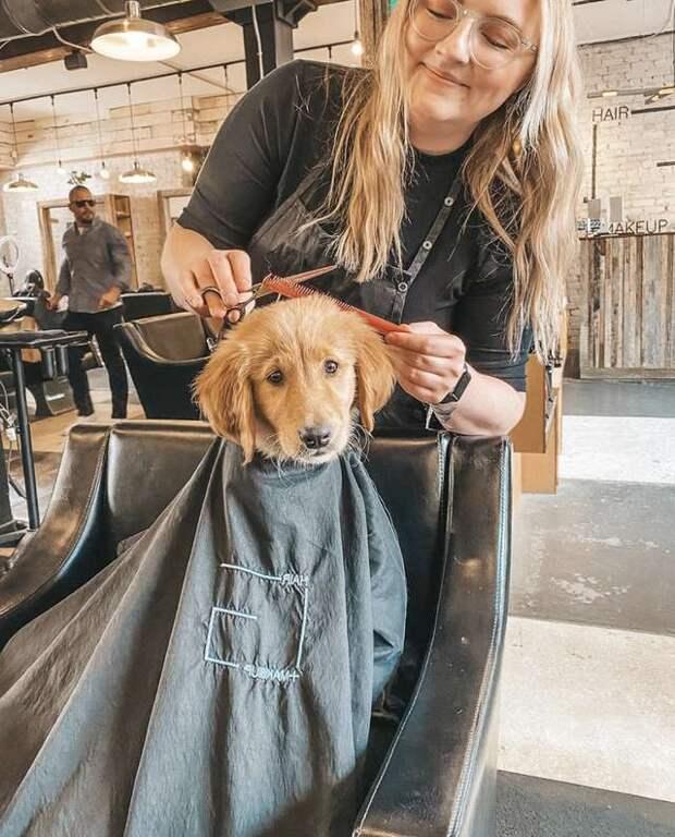 Девушка взяла с собой щенка в парикмахерскую, а все клиенты были в восторге от этой мордахи