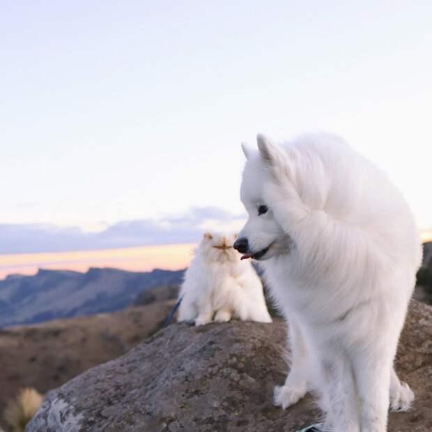 Улыбчивый пес и хмурый кот стали звездами соцсетей