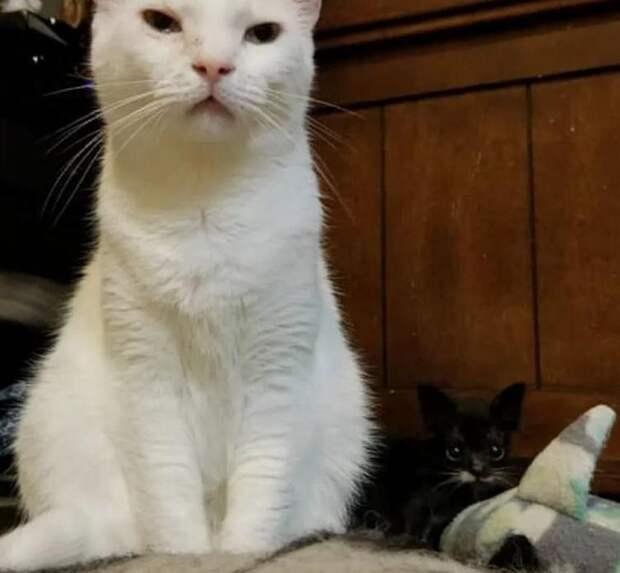 Этого крошечного котенка, весом всего 100 грамм, к счастью, удалось спасти