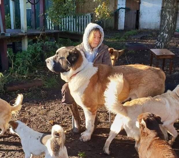 Эта собака перенесла сердечный приступ и умерла - из-за петард. А ведь сезон - снова близко