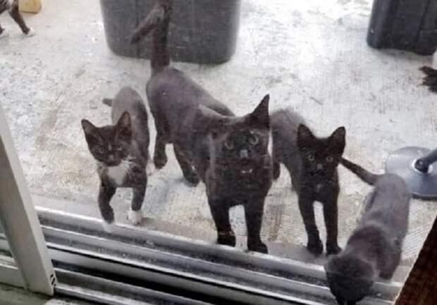Мама-кошка пришла в дом к людям и «попросила» их позаботиться о котятах