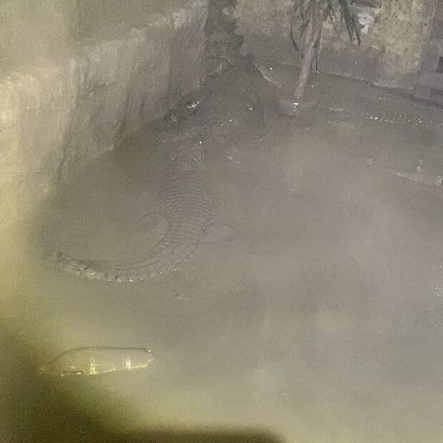 Заряд адреналина: как отлавливают крокодилов в Ялте после наводнения