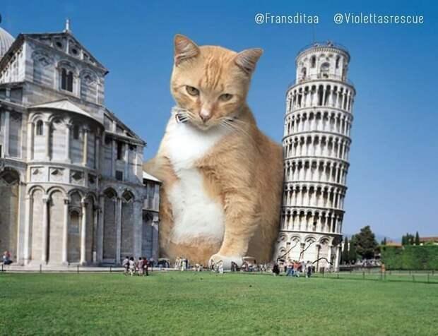 Гигантские кошки в городских ландшафтах животные, кошки, ландшафт, прикол, фотошоп, юмор