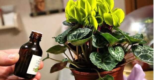 Нехитрое средство, которое не только отпугивает мошек, но еще является подкормкой для домашних растений