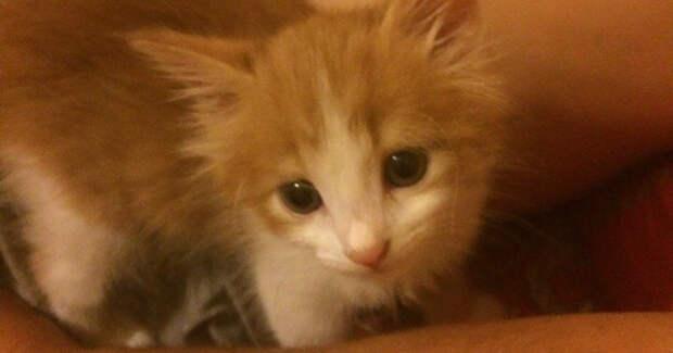 Они притащили в дом кота, несмотря на запреты отца… А тот вдруг оказался РАД!