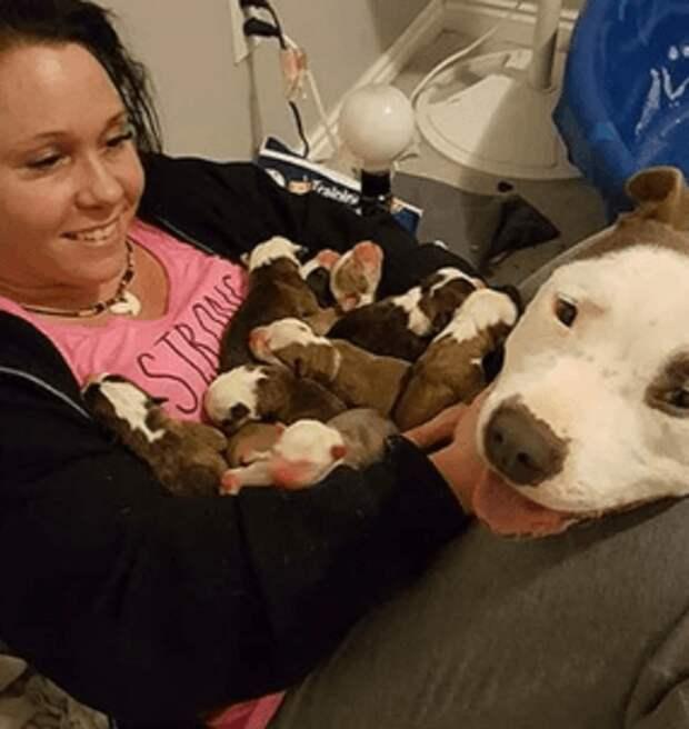 Питбуль сложил новорожденных щенков на руки к хозяйке, чтобы показать свою благодарность