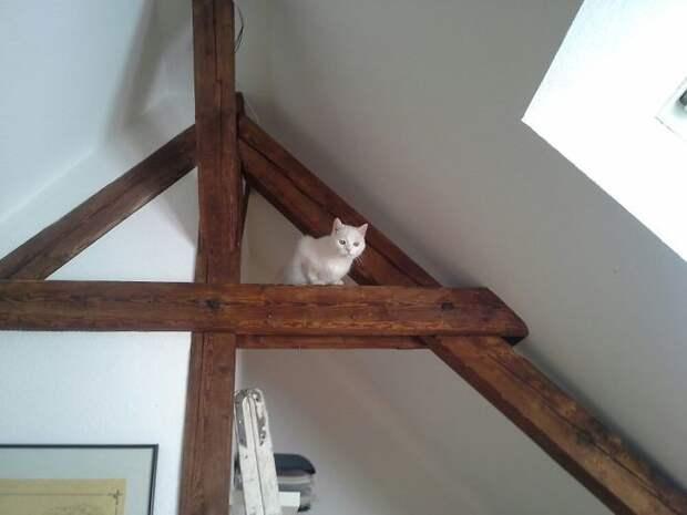 Они забираются повыше, чтобы понаблюдать за вами животные, коты, кошки, неожиданно, привычки, странности, фото, юмор