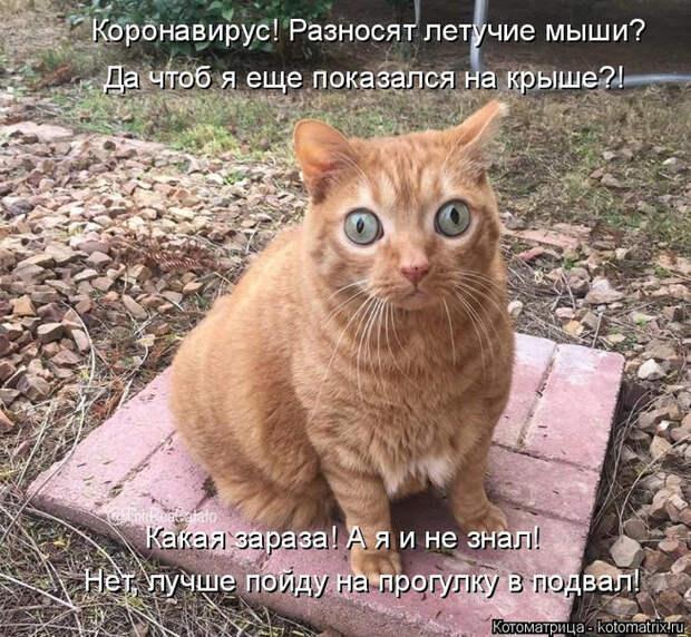 kotomatritsa_y (700x646, 535Kb)