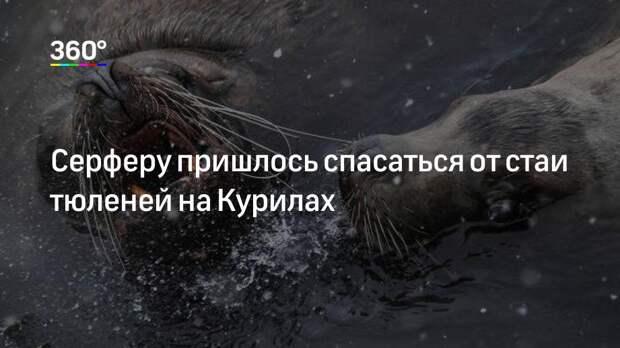Серферу пришлось спасаться от стаи тюленей на Курилах