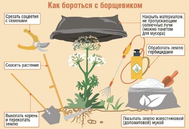 Опасный сорняк вырос сразу в нескольких районах СВАО