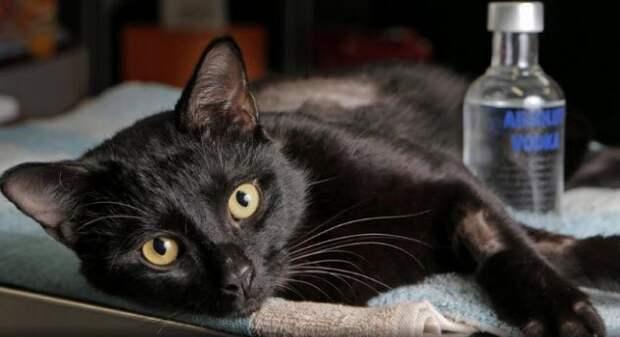 5 историй олюбопытных котиках, которых пришлось вызволять избеды