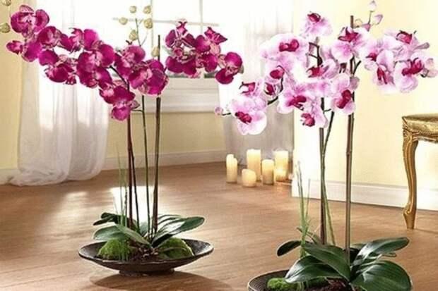 Орхидея-сильный женский талисман. Приметы про орхидею в доме