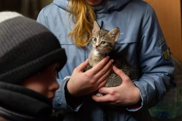 В Джанкое суд приговорил мужчину к тюрьме за убийство котенка на глазах у ребенка