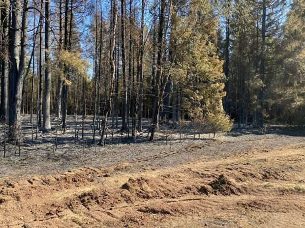 В Удмуртии оценят ущерб от лесного пожара в Воткинском районе