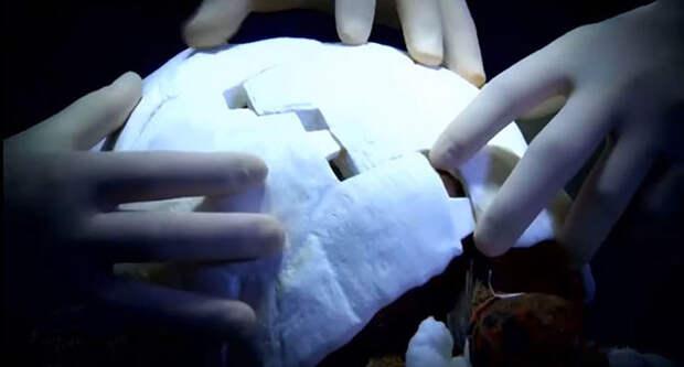 Травмированная черепаха получила первый в мире панцирь, напечатанный на 3D-принтере 3d принтер, панцирь, черепаха
