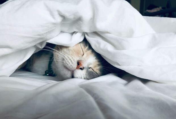 Почему кошка спит с хозяином?