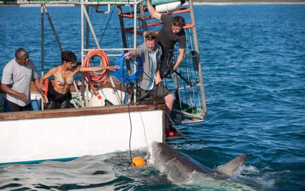 «Заклинательница акул»: Зубастые, а не кусаются