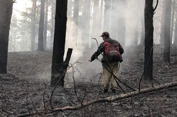 За минувшие сутки в РФ потушили 99 лесных пожаров