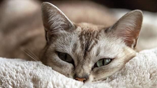 Путин поручил подготовить законопроект о ведении учёта домашних животных