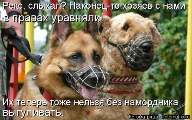 kotomatritsa_q (640x400, 230Kb)