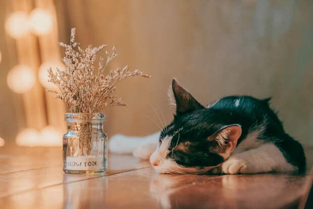 Рак, Альцгеймер и галлюцинации: к чему приводит недосып, чем важен сон и как правильно спать