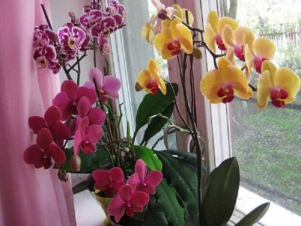 Чтобы орхидеи зацвели!