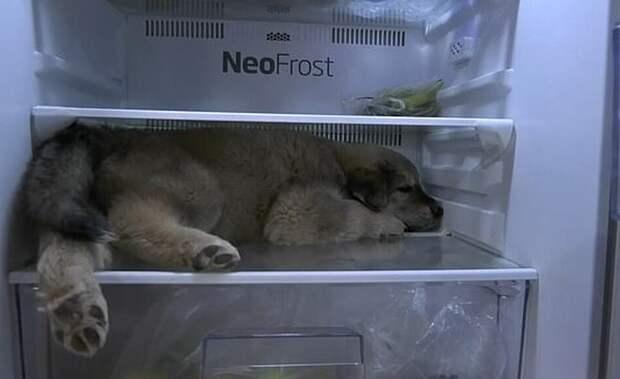 В Таиланде щенок придумал необычный способ спастись от жары