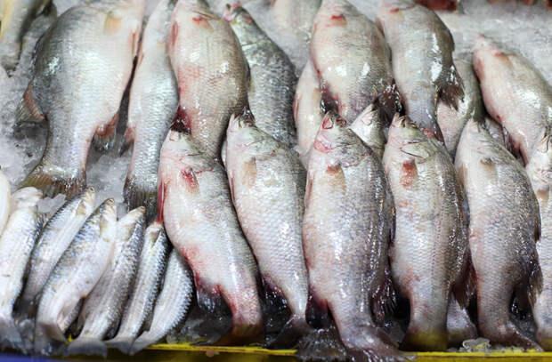 Речная рыба: выбираем по сезону, чистим и жарим без костей