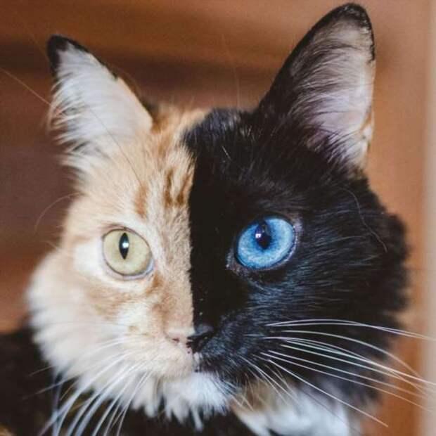 Животные с необычным окрасом