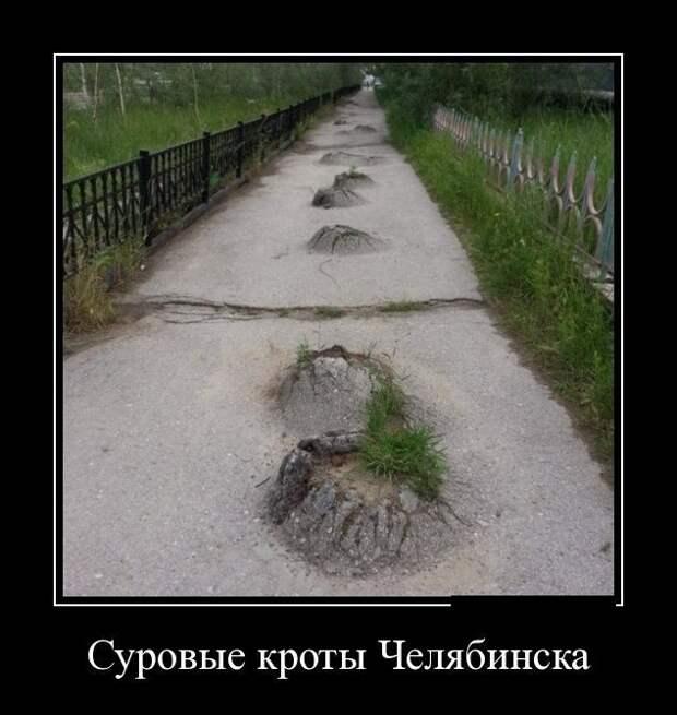 Суровые кроты Челябинска демотиватор, юмор