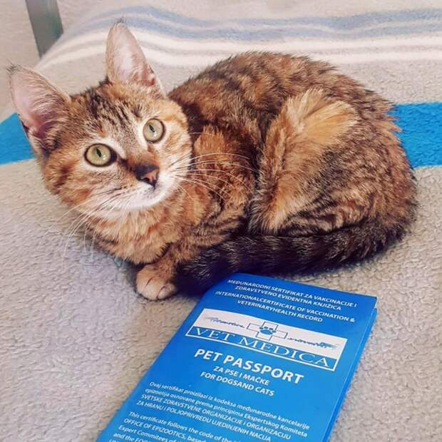 Путешественник подобрал бездомную кошку, и та изменила его планы забавно, интересное, история, коты, кошки, питомцы, спасение животных, хозяева