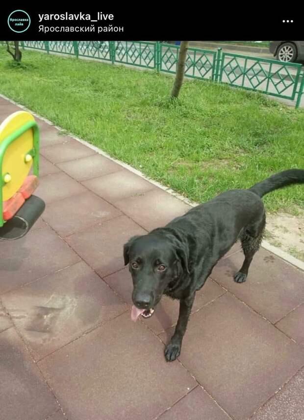 Фото дня: потерянный пес в Ярославском вернулся домой