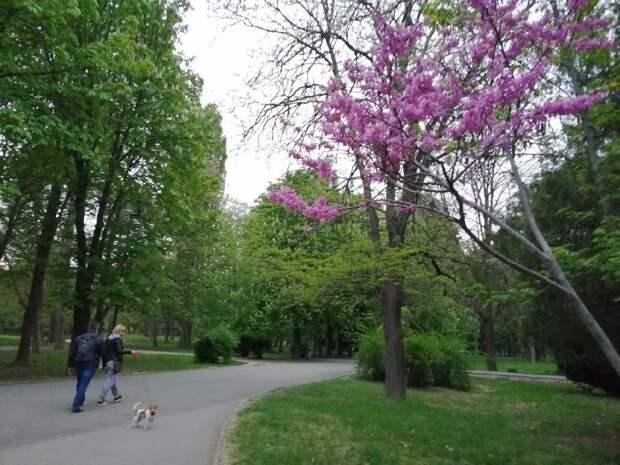 Погода в Крыму на 13 мая: южный ветер и тепло до +24°