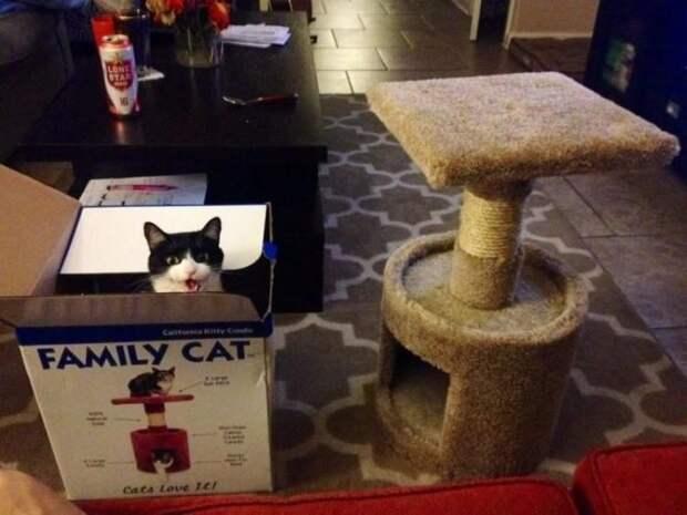 Кошки просто созданы для борьбы с порядком и логикой