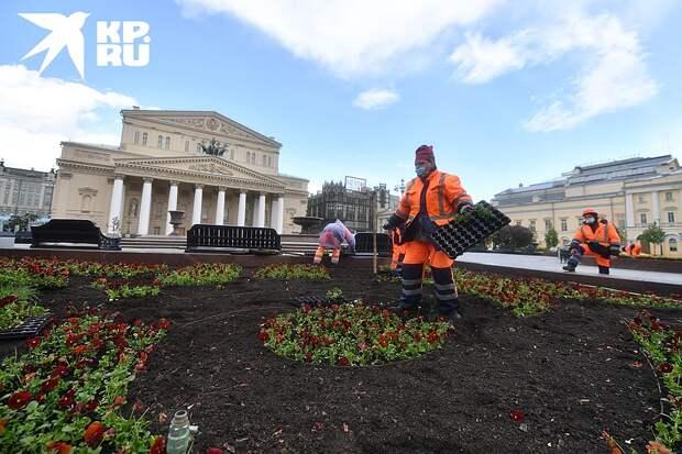К общественным работам относятся, например, озеленение территорий Фото: Иван МАКЕЕВ