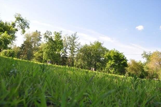 Лужок вашей мечты. Как вырастить газон на участке