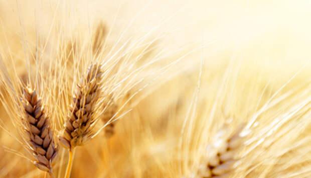Правительство утвердило формулу расчета пошлины на экспорт зерна