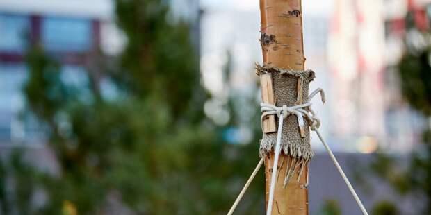 Осенью в Жулебинском лесопарке жители высадят именные деревья